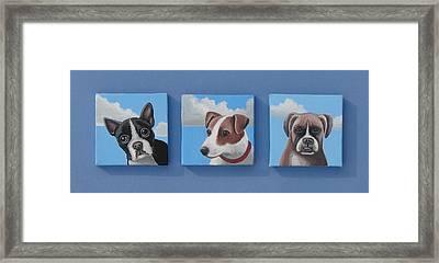 Three Pups Framed Print