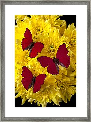 Three Red Butterflys Framed Print by Garry Gay