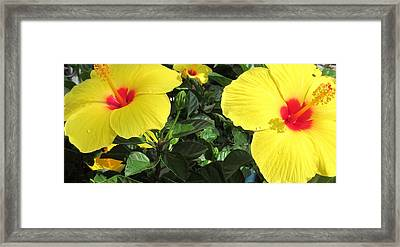 Three Red Deep Throats Framed Print