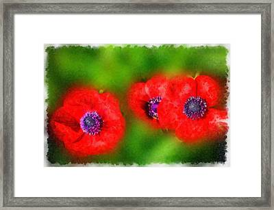 Three Red Popies  Framed Print