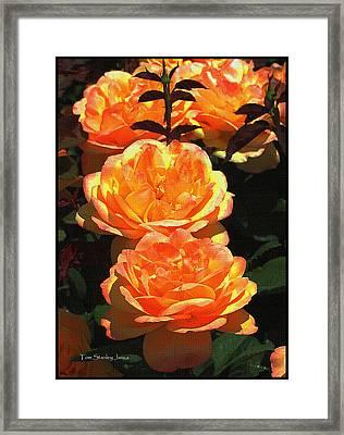 Four Rose At Mcc Framed Print