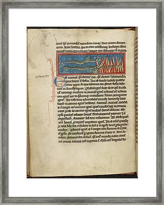Three Salamanders Framed Print by British Library
