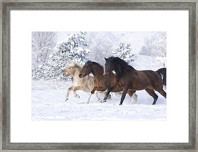 Three Snow Horses Framed Print