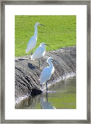 Framed Print featuring the photograph Three Stooges by Deb Halloran