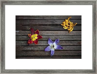 Three Framed Print by Svetlana Sewell