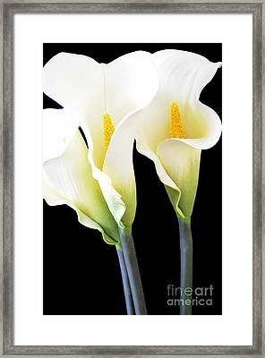 Three Tall Calla Lilies Framed Print by Mary Deal