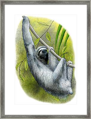 Three-toed Sloth Framed Print by Roger Hall