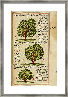Three Trees Framed Print by British Library