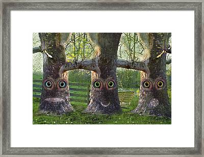 Three Trees Framed Print