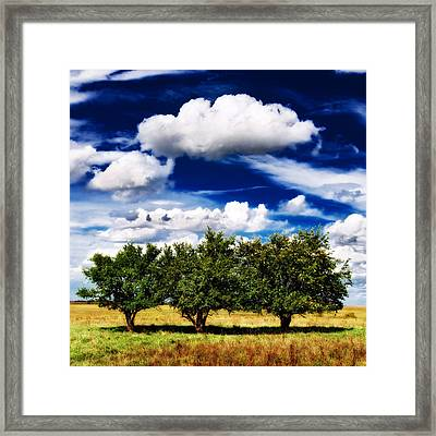 Three Trees Framed Print by Eric Benjamin