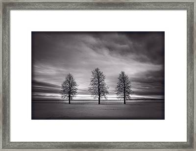 Three Trees Framed Print by Steve Gadomski