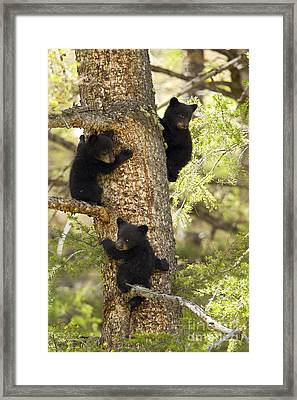 Family Tree Framed Print by Aaron Whittemore