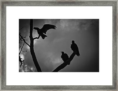 Three Vultures Framed Print by Bradley R Youngberg