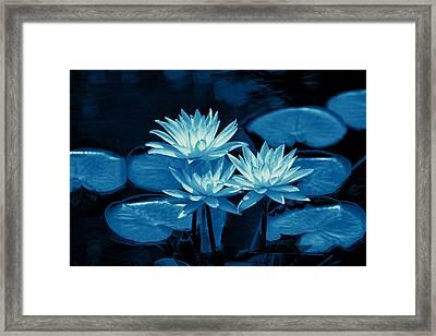 Three Water Lilies In Cyan Framed Print by Linda Phelps