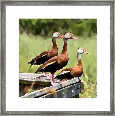Three Whistling Ducks Framed Print by James Stough