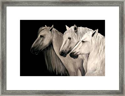 Three White Horses Framed Print by Nancy Bradley