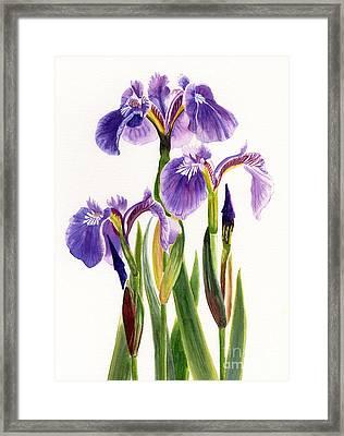 Three Wild Irises On White Framed Print by Sharon Freeman