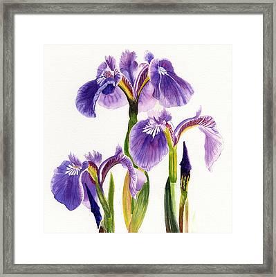 Three Wild Irises Square Design Framed Print