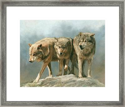 Three Wolves Framed Print