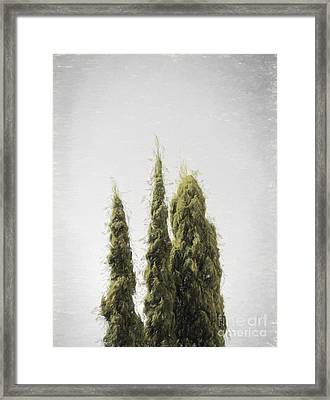 Threes - Without A Sound Framed Print by Jorgo Photography - Wall Art Gallery