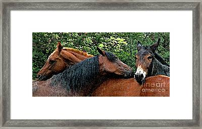 Threes A Crowd Framed Print by Deborah Johnson