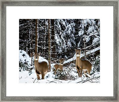 Three's A Crowd Framed Print