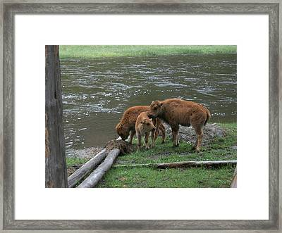Threesome Framed Print by Yvette Pichette