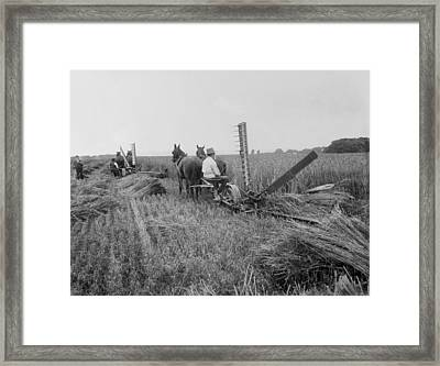 Threshing Hay - 1893 Framed Print by Daniel Hagerman