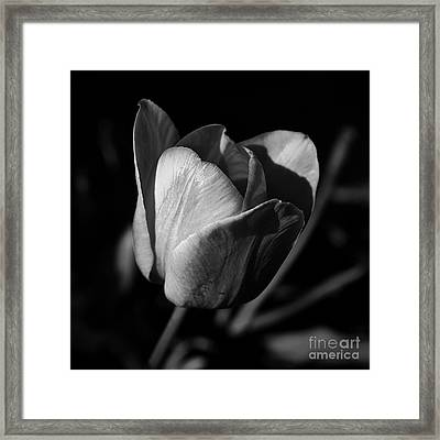 Threshold - Monochrome Framed Print
