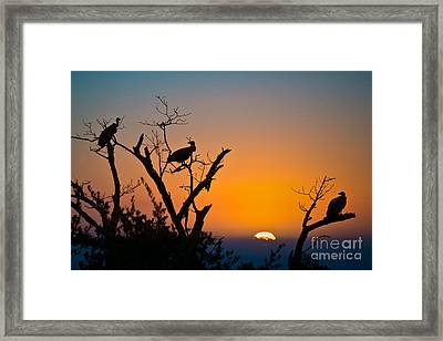 Three Vultures Waiting Framed Print