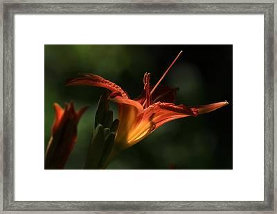 Throat Shadows Framed Print by Donna Kennedy