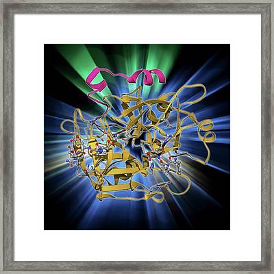 Thrombin Protein Framed Print