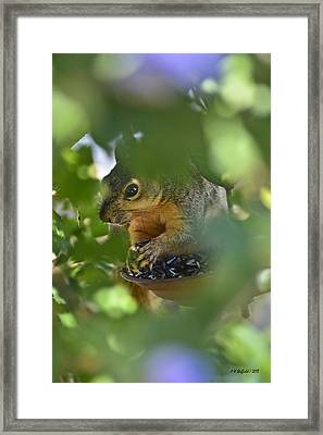 Through The Althea Framed Print by Allen Sheffield