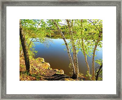 Through The Birch Framed Print