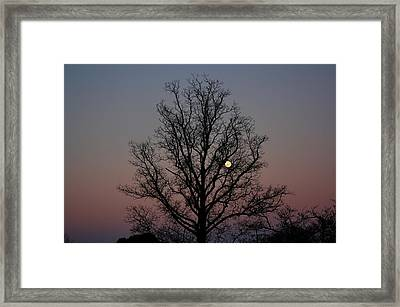 Through The Boughs Landscape Framed Print by Dan Stone