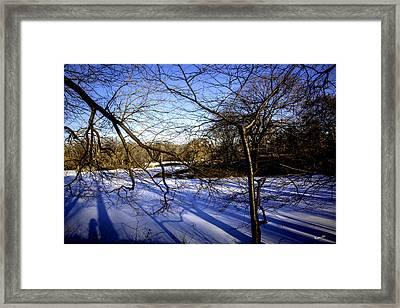 Through The Branches 4 - Central Park - Nyc Framed Print by Madeline Ellis