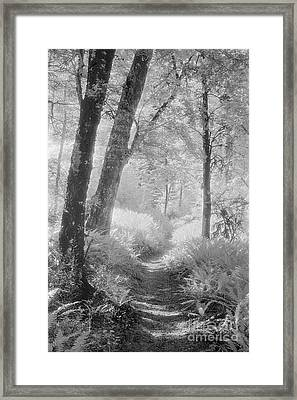 Through The Bush Framed Print