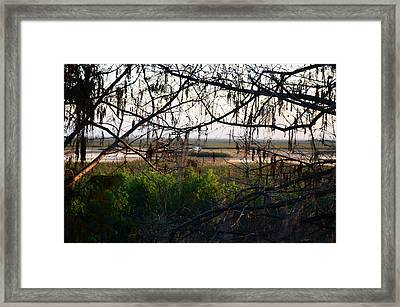 Through The Cypress  Framed Print by Ken  Collette