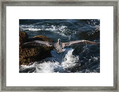 Through The Eyes Of A Pelican Framed Print by Nathan Rupert