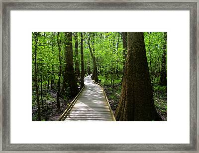 Through The Forest Framed Print