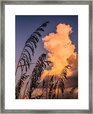 Through The Grass Framed Print by Zina Stromberg
