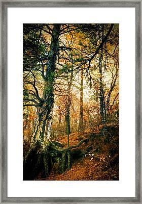 Through The Island Forest Framed Print