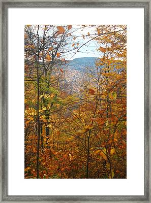 Framed Print featuring the photograph Through The Leaves by Alicia Knust