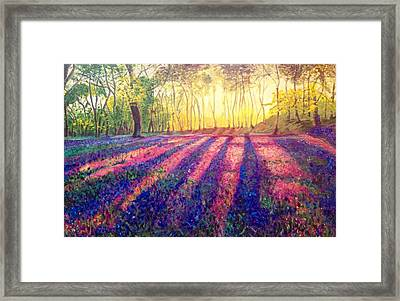 Through The Light Framed Print by Belinda Low