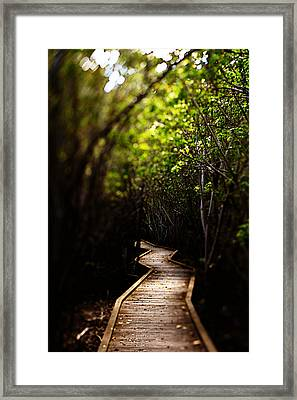 Through The Mangroves Framed Print by Heather Green
