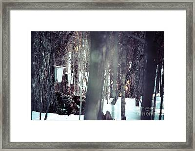 Through The Maples Framed Print by Cheryl Baxter
