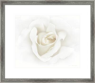 Misty Ivory White Rose Flower Framed Print
