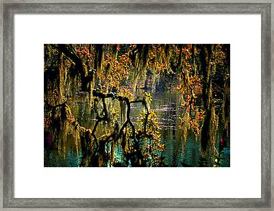 Through The Moss Framed Print