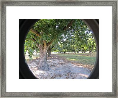 Through The Orchard Framed Print