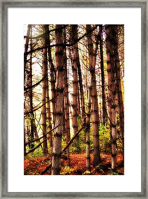 Through The Pines Framed Print by Chastity Hoff
